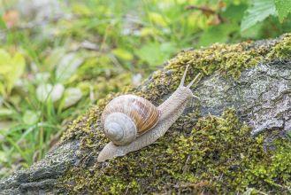 Nie każdy ślimak to wróg
