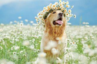 Co zrobić z psem w wakacje?