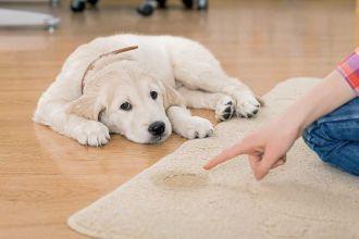 Uczymy szczeniaka czystości