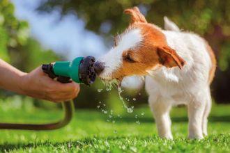 Pomóż psu przetrwać upał