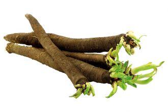 Warzywnik retro: skorzonera, czyli wężymord