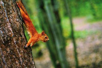 9 rzeczy, których nie wiesz o zwierzętach