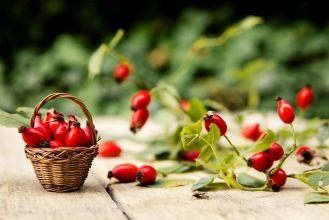 Dzika róża – właściwości i przepisy na przetwory