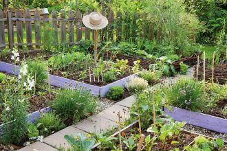 Domowe nawozy i podwyższone grządki. Zakładamy ogródek warzywny - odcinek trzeci