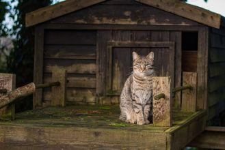 domek dla kota na zimę