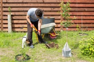 Jak sprawić, aby Twoje rośliny nie cierpiały z braku wody? Wypróbuj hydrożel (TerraCottem)