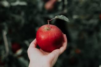 Pachnie jabłkami: którą odmianę starych jabłoni wybrać?