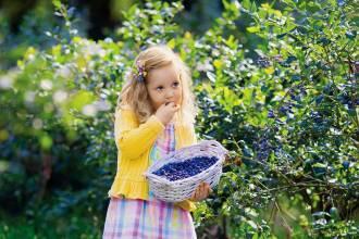 Jagoda z ogrodu: którą z 6 rodzajów wybierzesz?