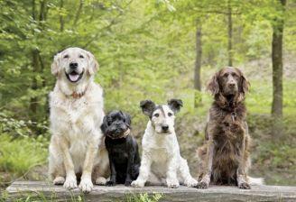 Wybieramy psa