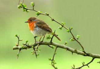 Wielkie poruszenie wśród ptaków