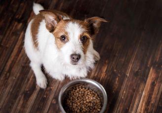Superfoods dla psów – jak wpływają na kondycję i zdrowie?