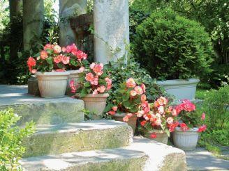 Kwitnące donice