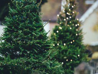 Jakie drzewko wybrać na Boże Narodzenie?