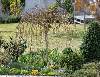 Wierzba – dlaczego warto ją mieć w ogrodzie?
