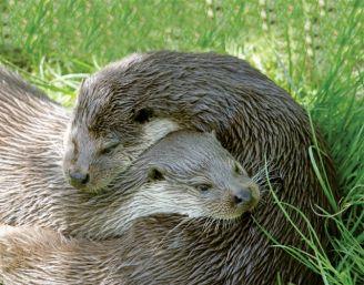 Odczarowanie wydry