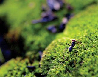 Jaką zimę wróży ogród