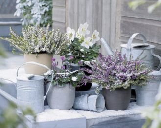Kwiaty w środku zimy