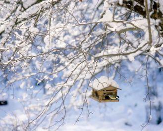 Zimowe dokarmianie zwierząt