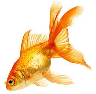 Żywienie ryb w oczku wodnym