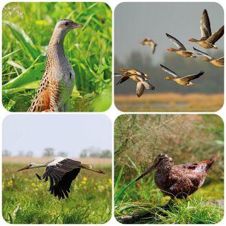 Sekrety ptasich wędrówek