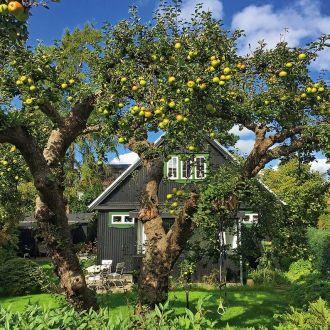 Najlepsze jabłka w Twoim ogrodzie