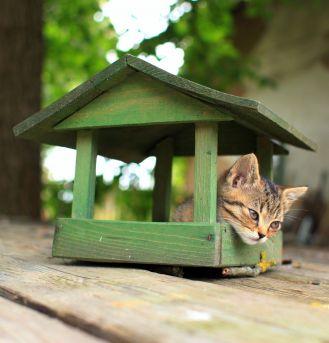 Chatka dla dzikiego kotka