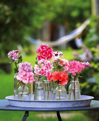 Dekoracje z pelargonii do domu i ogrodu