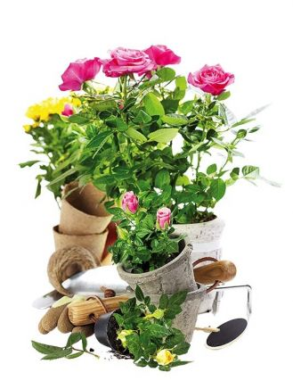 Własne kwiaty przez cały rok