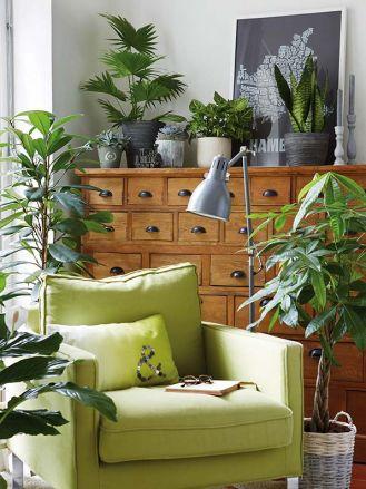 Domowa dżungla: monstery, palmy i draceny
