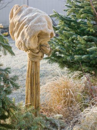 Jak zadbać o rośliny, zanim spadnie śnieg?