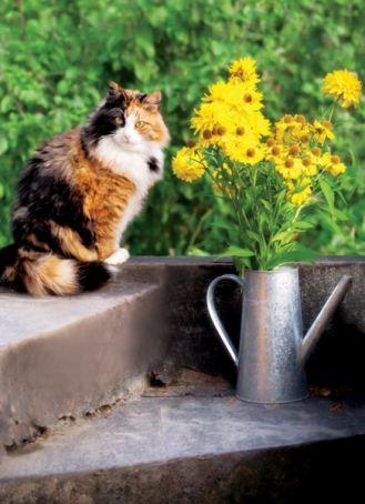 Jak świętują koty