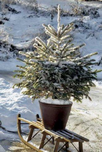 Bądź dobry dla drzewka