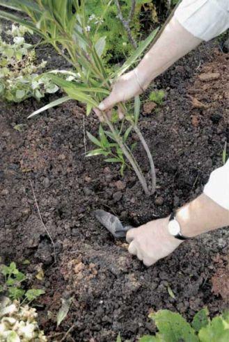 Odżywka dla roślin