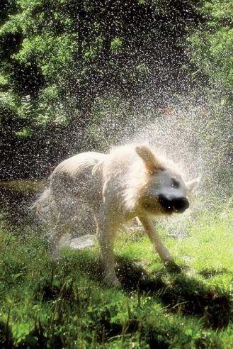 Pies w kąpieli