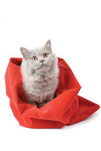 Nie kupuj kota w worku