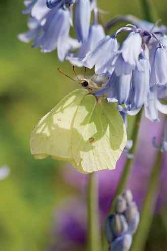Wiosenny motyl