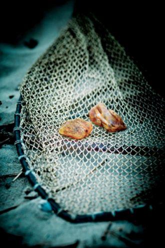 Poławiacze bursztynu