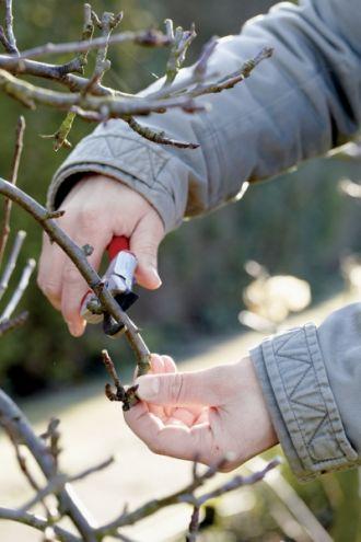 Kalendarz ogrodnika: jakie prace wykonać w ogrodzie zimą?