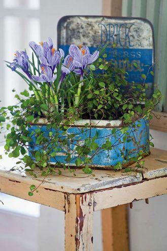 wiosenne kwiaty krokusy