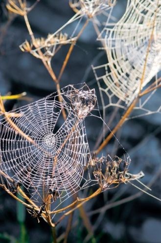 Podglądaj pająka