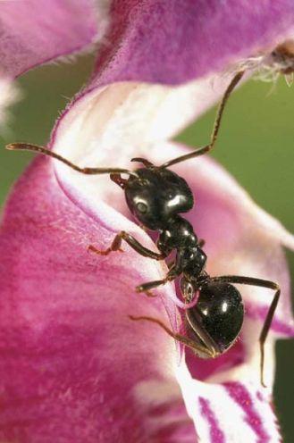 Czego nie wiemy o mrówkach