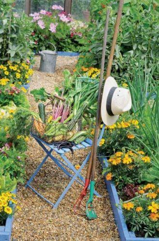 Topinambur – uprawa, właściwości i historia