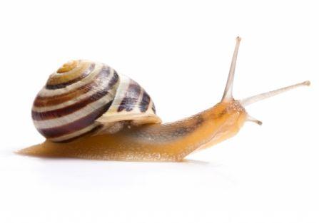 Rabarbar kontra ślimaki