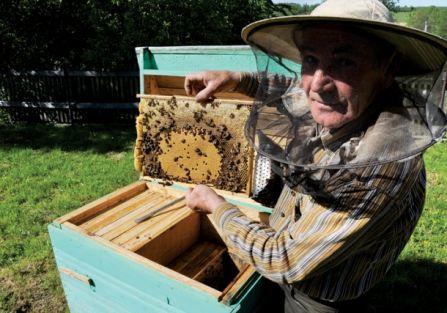 Praca przy pszczołach