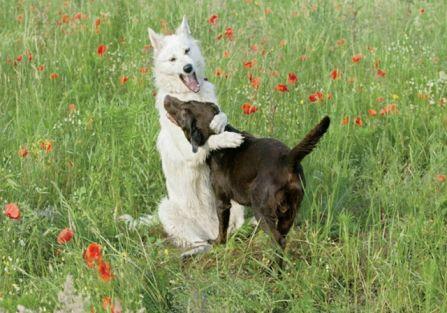 Czipowanie zwierząt