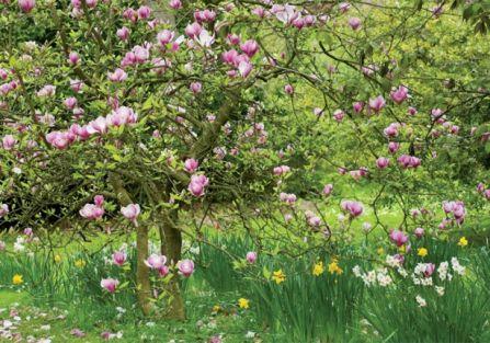 By twój ogród był piękny...