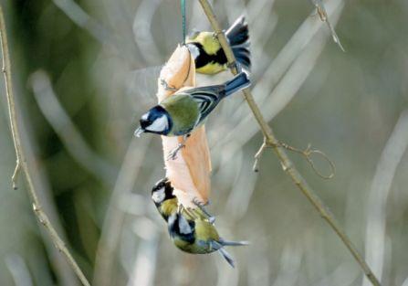 Czym nie karmić ptaków?