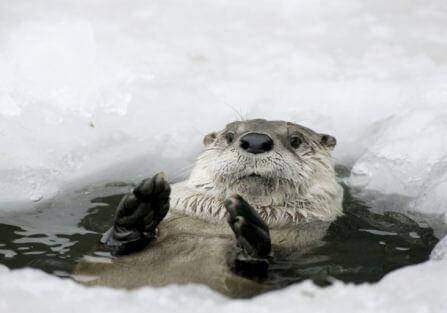 Hop do wody