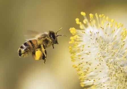 Co pszczoły mówią o pogodzie