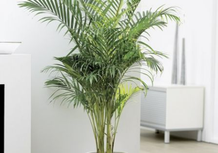 Rośliny oczyszczające